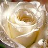 Flowers : Internet Photos