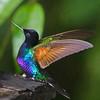 Birds : Internet Photots