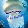 Fish and Ocean Life : Fresh and Sea Water